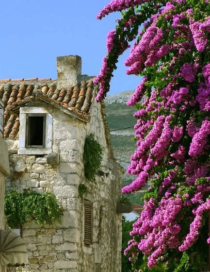 Dalmatian coast, CroatiaOld House, French Countryside, Oldhouse, Beautiful Places, Stones Facades, Flower Vines, Wall Flower, Families Holiday, Purple Flower
