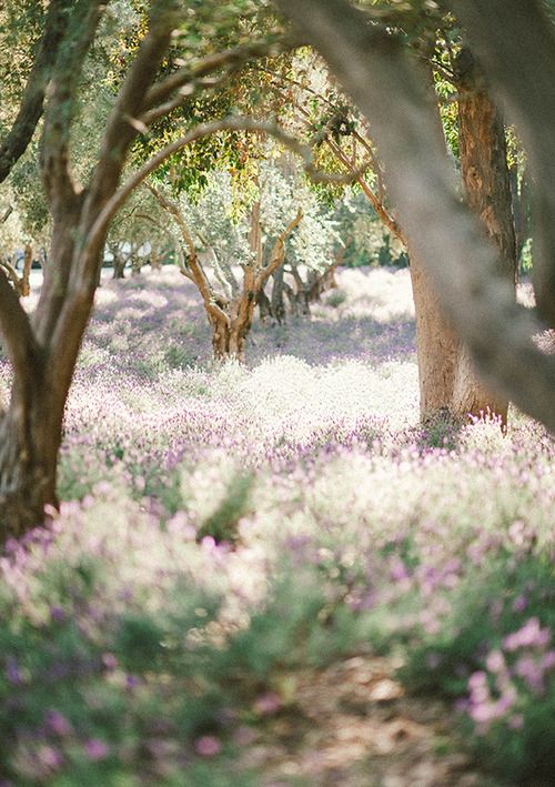 recreate this lavender field for a ceremony #inspo