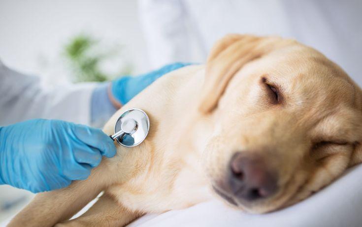 Die häufigsten Hundekrankheiten: Symptome und Behandlung