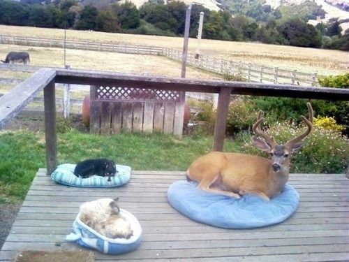 Meanwhile, out on the back porch something weird is going on...: Dogs Beds, Dogs Cat, Pet Deer, Funny, Back Porches, House, New Dogs, New Friends, Animal