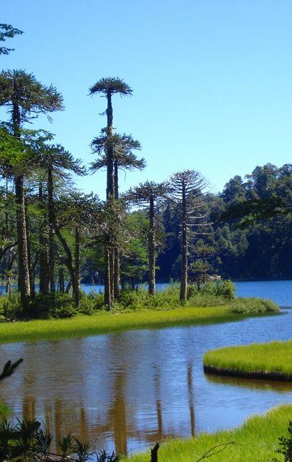 Lake Toro (Lago Toro) in Huerquehue National Park in the Andes, Araucanía Region, Chile