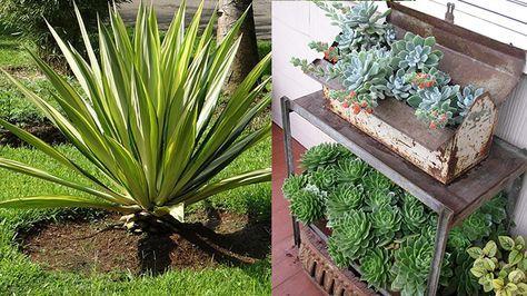 Oltre 25 fantastiche idee su coltivare piante grasse su for Piante per giardino verticale esterno