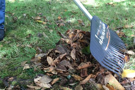 Gather fallen leaves into piles for compost with a lightweight rake. Garden Mentors shares more about fall cleanup in this guide. Click in to learn more.