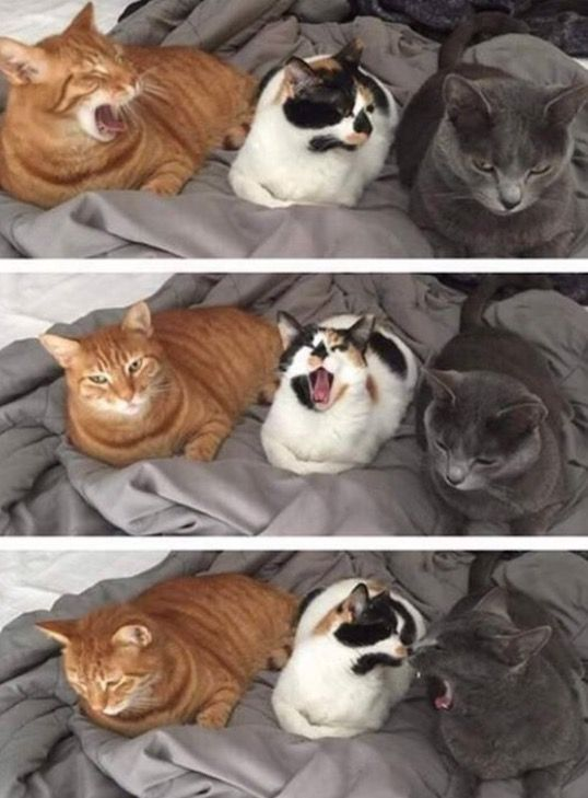 Yawning is always a shared event...