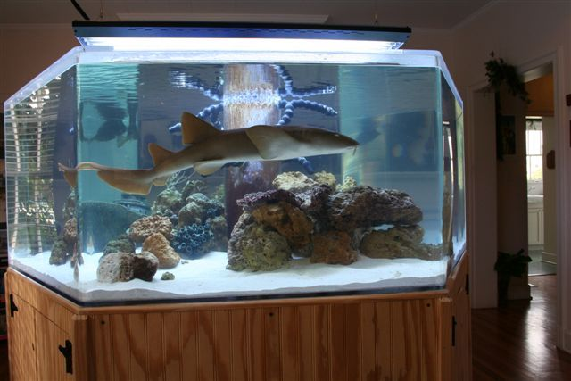 Shark tank dream home pinterest aquarium fish shark for Fish tank house