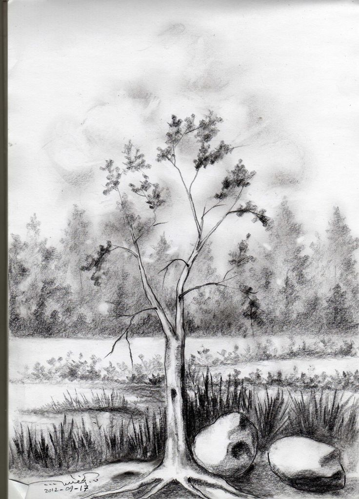 The lonely tree! 2b,4b, and 6b pencils. qusay.alkhateeb.se