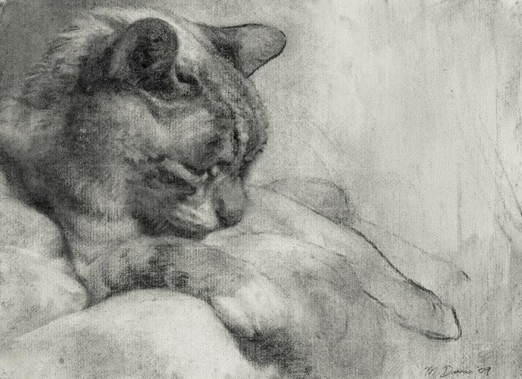 "Michael John Davis  Sleeping Cat 2010 Charcoal on Paper 14"" X ""18"
