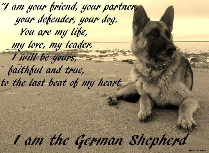 Risultati immagini per Pictures german shepherd love you