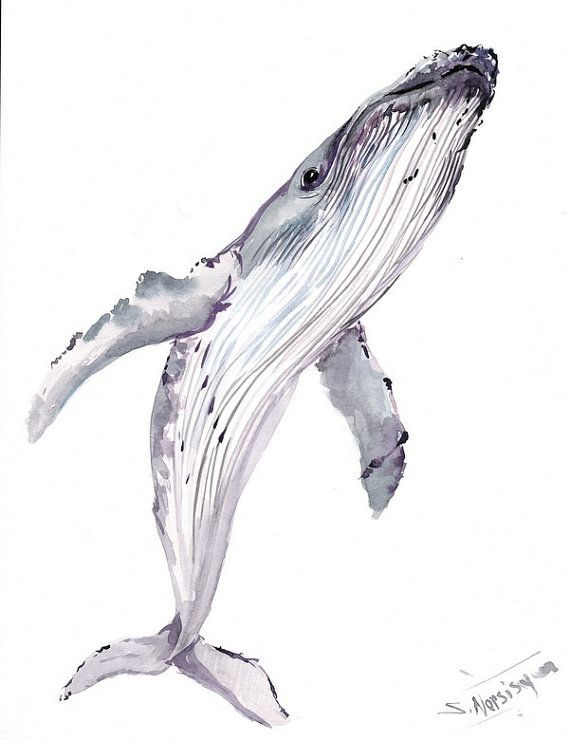 Humpback Whale Original watercolor painting 14 X by ORIGINALONLY