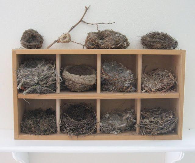 Bird Nests Display