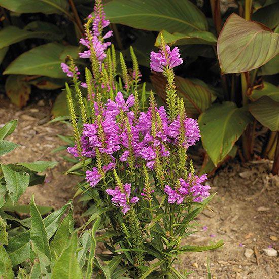 Perennials For Wet Soil Garden Pinterest Plants And
