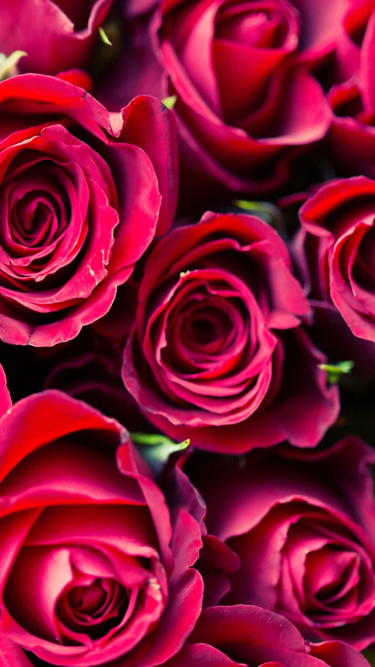 17 images about flowers on pinterest cell phone - Pink roses and hearts wallpaper ...