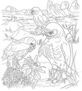 Desert Animals Coloring Pages Tortoise