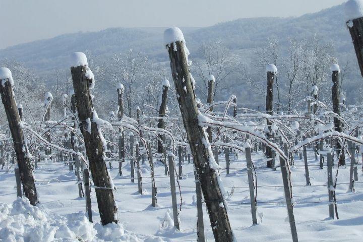Márton Napi Vigasságok Egész Novemberben! - Mokos Családi Pincészet - Villányi borok és gyümölcsborok