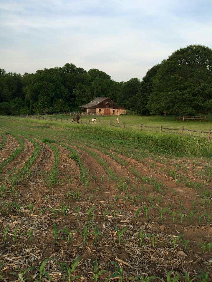 Beautiful farms