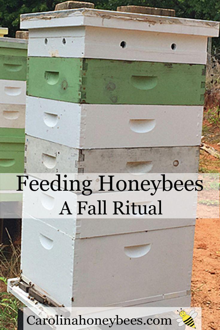Feeding honeybees in the fall is sometimes necessary. Carolina Honeybees Farm