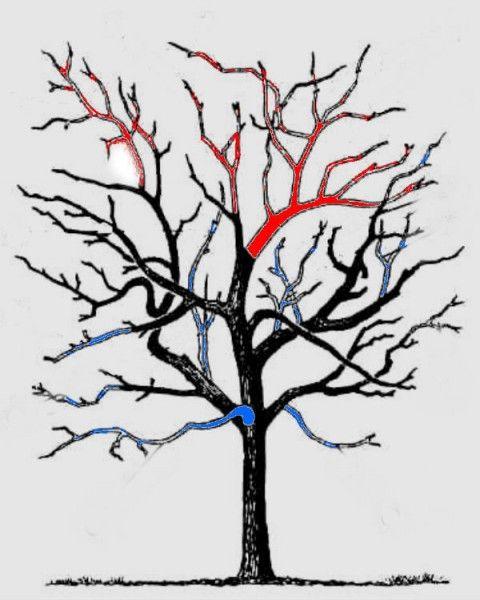 Обрезка старых яблонь осенью для начинающих в картинках