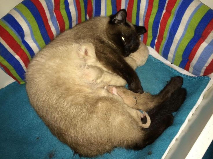 4-11-2015 Yet is bevallen van 5 prachtige kittens
