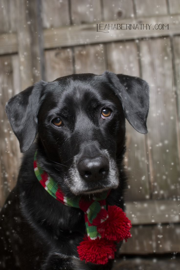 Best 25 Christmas Puppy Ideas On Pinterest Sleeps To