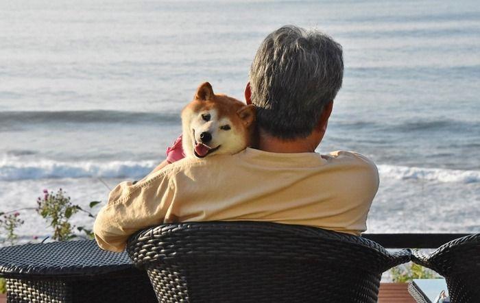 いぬのきもちweb Magazine更新しました 73 かぼすちゃんとおさんぽ Powered By ライブドアブログ 柴犬 いぬ かわいいペット
