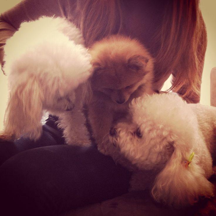 Friends dogs #love #animals #truelove #cute