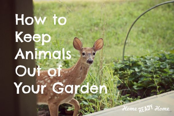 17 best images about landscaping knowledge on pinterest gardens weed and tree pruning - Garden ideas to keep animals out ...