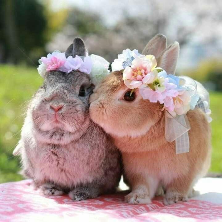 19 Cute Baby Bunnies – nett