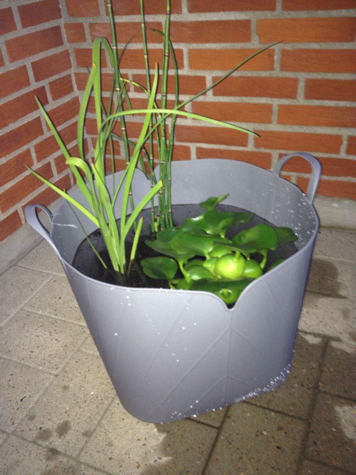 Mini havedam på terrassen med padderokker, iris og vandhyacinter