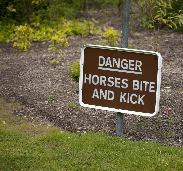 Best Ha The Epicenter Of Horse Humor Images On