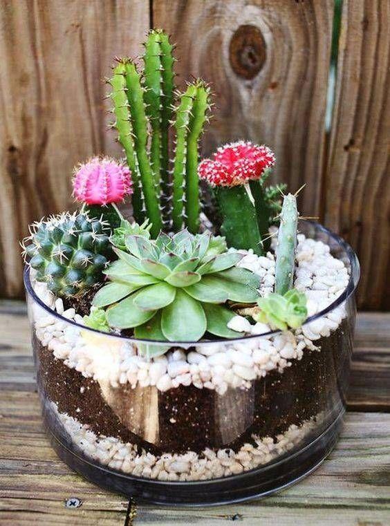 36 Ideas For Succulent Terrarium Diy Decor Mini Gardens Colorful Succulents, Cacti And Succulents, Planting Succulents, Cactus Planta, Cactus Y Suculentas, Terrarium Diy, Terrarium Wedding, Patio Plants, Cool Plants