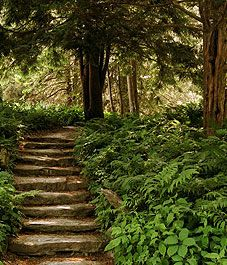 I really want & need these steps in the backyard! The slope is perfect.... mmm    Designing a shade garden