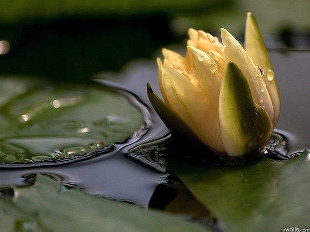"""Однажды один бедняк встретил Будду и спросил: """"Учитель, почему я так беден?"""" Будда ответил: «Потому что ты не практикуешь щедрость».  Бедняк сразу же подумал, что ему нужно быть очень богатым, чтобы практиковать это и сказал: - Но как мне практиковать щедрость, если мне нечего отдать другим? - У тебя есть пять богатств, с помощью которых ты мог бы практиковать щедрость, но ты этого не делаешь: Своим лицом ты можешь дарить улыбки другим, но ты этого не делаешь. Своими глазами ты можешь…"""