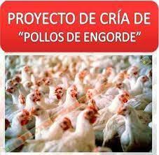 Proyceto de  pollos de Engorde