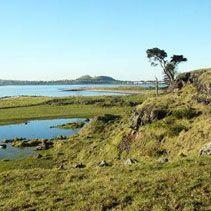 Otuataua Stonefields. Supposodly according to NZ herald has a public avocado orchard. Season Nov - March, limit 5 per person