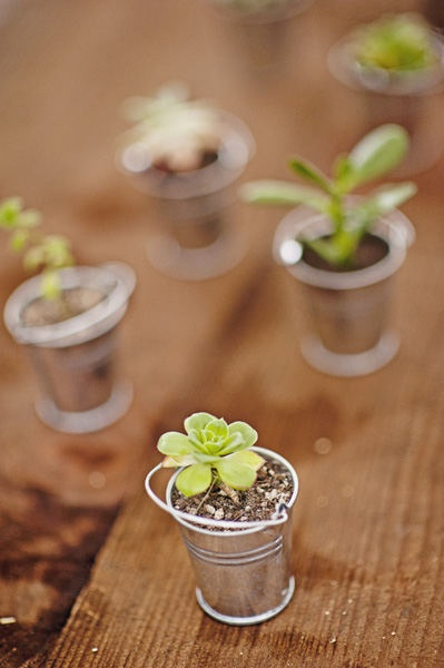 cutest favor and also decor, mini galvanized buckets with succulents.