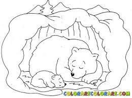 Αποτέλεσμα εικόνας για αρκουδα καφε κοιμαται