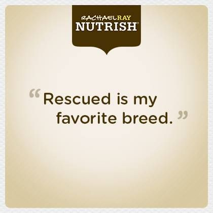 We can't agree more! Did you rescue your pet? Click the quote for coupons from Nutrish. #nutrishforpets #rachaelraynutrish
