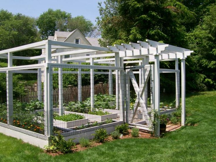 enclosed vegetable garden great for keeping dogs cats and birds out of the gardenor deer proof - Deer Proof Vegetable Garden Ideas
