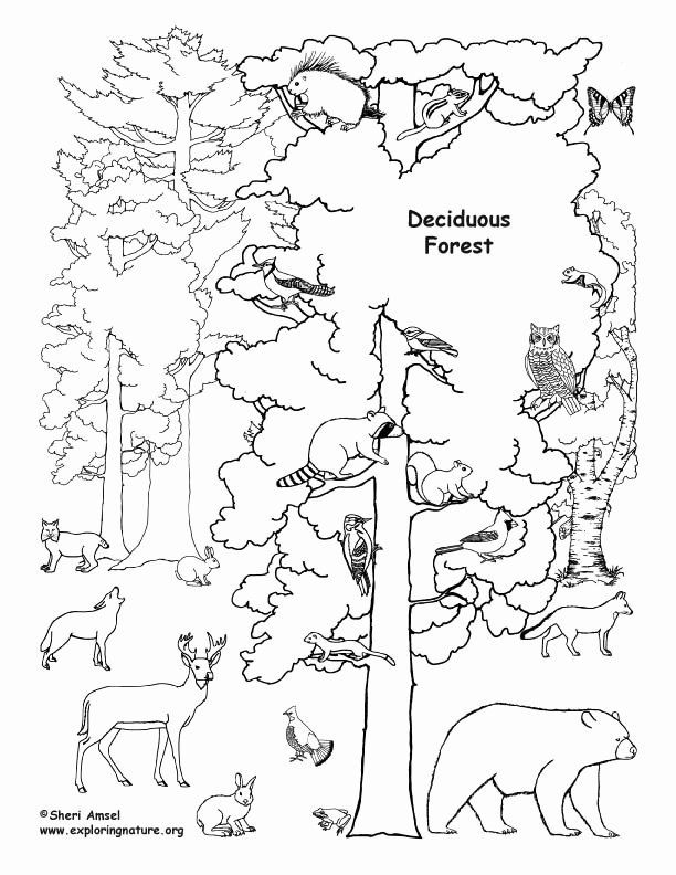 Forest Animals Coloring Book Awesome Deciduous Forest With Animals Coloring Nature Animal Coloring Books Animal Coloring Pages Coloring Pages