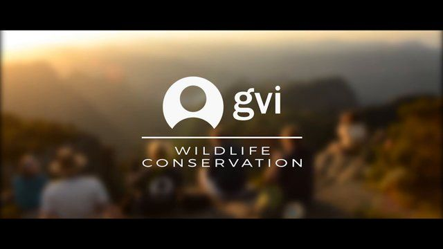 Join our wildlife conservation volunteering projects and help protect endangered fauna and flora in exotic locations around the world like the Seychelles, Thailand, Costa Rica and more!  Find out more: www.gvi.co.uk/focus/wildlife-conservation