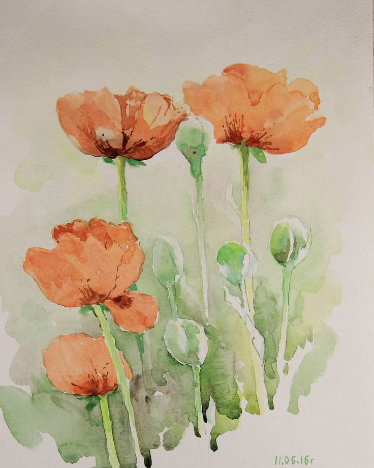 Poppy.Маки #flowers #watercolor #red #green #blossom#summer#sun#beautiful#colorful#nature#painting#маки#акварель#красный#зеленый#лето#солнце#природа#цветы