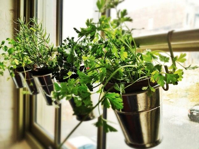 Use a tension rods and some hooks to DIY this indoor herb garden.