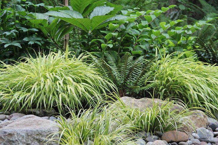 Replace your drowning lawn with moisture-loving ground covers like Evergold sedge (Carex oshimensis 'Evergold', USDA zones 5 to 11), sweet grass (Acorus gramineus, zones 6 to 9), spiderwort (Tradescantia virginiana, zones 5 to 10) and spikemoss (Selaginella spp, zones vary).
