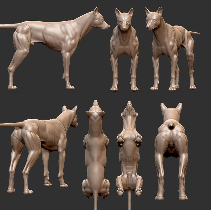 Wolf Anatomy Study WIP by Vraja Parra | Realistic | 3D | CGSociety