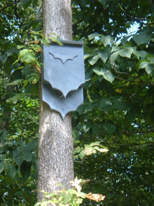 DIY plans for building a bat house with an image of a flying bat. This article includes diagrams, photos and step-by-step instructions for building and hanging a bat box.