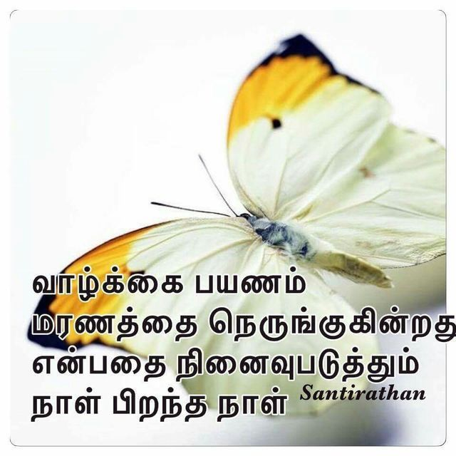 17 Best Images About Tamil Quotes On Pinterest