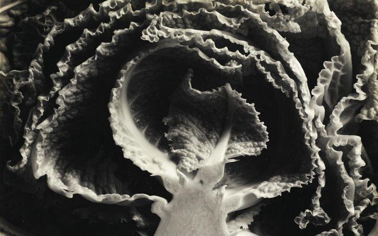 Kale Halved, 1930, author: Edward Weston, price: $ 112.500 ===================== Kale Halved, 1930, АВТОР: Эдвард Уэстон, СТОИМОСТЬ:$ 112.500