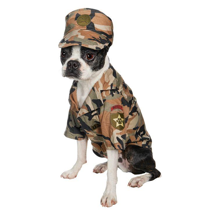 49 best Halloween Pets images on Pinterest | Pets ...