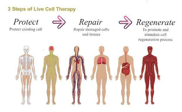Purtier Stem Cell 3 Steps Of Live Cell Therapy
