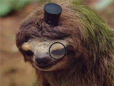 #craftbeer #beer #gif #drink #drinking #drunk #Sloth